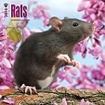 Rats 2016 Square 12x12 Wall Calendar