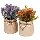 Set Of 2 Amazing 16 CM Artificial Flower Plants With Vase