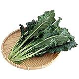 国産イタリア野菜 新鮮カーボロ・ネロ 業務用 2kg(200g×10袋)水耕栽培