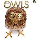 2016 Owls Wall Calendar