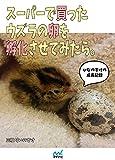 スーパーで買ったウズラの卵を孵化させてみたら。~ひなのすけの成長記録~