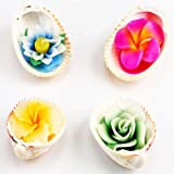 Ghasitaram Gifts Set of 4 Natural Shell Floating Candles(Multi Colour,Round)