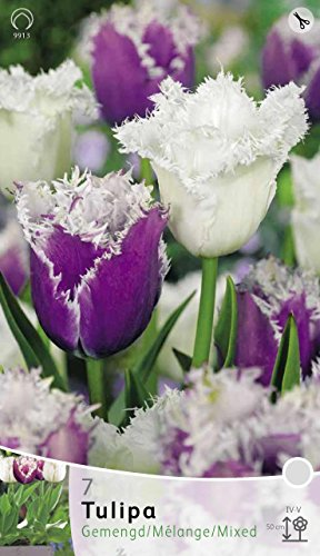 bulbi-autunnali-tulipano-cummins-e-daytona-confezione-da-7-bulbi-bulbs-bulbes