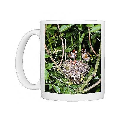 Photo Mug Of Bird - Pair Of Goldfinches With Young In Nest In May front-940295