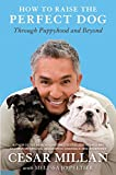 Download How to Raise the Perfect Dog: Through Puppyhood and Beyond