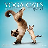 img - for Yoga Cats Together 2017 Square Plato book / textbook / text book