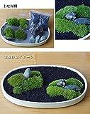 苔が主役の苔盆栽!材料すべてお届けします【苔盆栽(こけぼんさい)キット~富士砂】