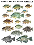 Sunfishes-of-North-America