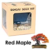 Eves Red Maple Bonsai Seed Kit, Woody, Complete Kit to Grow Red Maple Bonsai from Seed