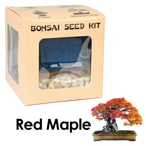 Eve's Red Maple Bonsai Seed Kit, Woody, Complete Kit to Grow Red Maple Bonsai from Seed (Red Bonsai Tree compare prices)