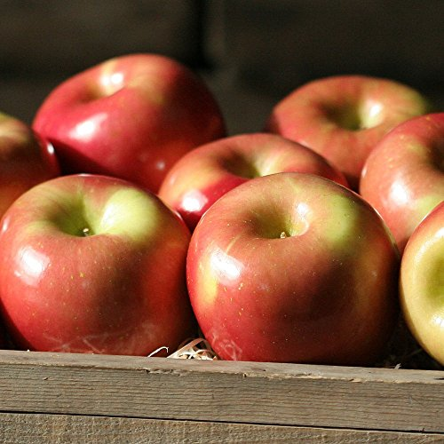 Fuji Apples - 4 lbs - Apples From the Fruit Company