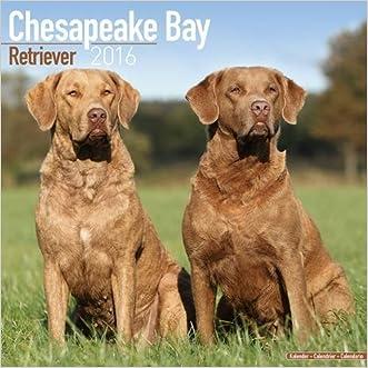 Chesapeake Bay Retriever Calendar - Only Dog Breed Chesapeake Bay Retriever Calendar - 2016 Wall calendars - Dog Calendars - Monthly Wall Calendar by Avonside