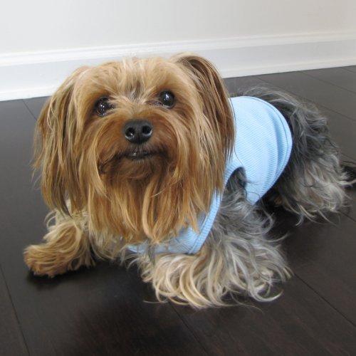 Artikelbild: Fresh Blue Hund Shirt, Medium