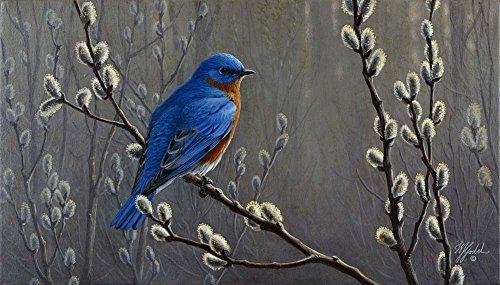 Signals Of Spring - Eastern Bluebird by Wilhelm J. Goebel Art Print, 24 x 14 inches