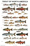 Trout of North America Poster