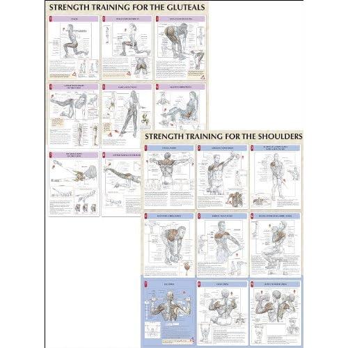 Strength Training Anatomy Poster Series: 9780736059312: Medicine