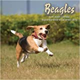 2010 Dog Calendars: Beagles - 2010 Dog Calendar - 30 x 30 cm