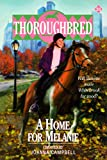 A Home for Melanie (Thoroughbred Series #31) (0061065412) by Campbell, Joanna