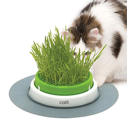 Catit Senses Grass Planter 3