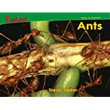 Ants (Bugs!) ~ Trace Taylor