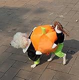(フィーショー) FEESHOW ハロウィン かぼちゃ運送者 ペットコスチューム  ハロウィンハット halloween 犬服 仮装 かぼちゃの着ぐるみ コスプレ衣装 パピー パーティー  超小型~中型犬に最適 年賀状撮影 記念写真 5サイズ (L)