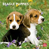 (12x12) Beagle Puppies - 2013 Wall Calendar
