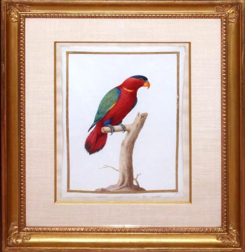 Fictitious Parrot (Fine Art Paintings compare prices)