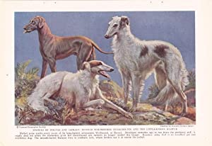 1937 Russian Wolfhound & Rampur Hunting Dogs Edward Herbert Miner Vintage Dog Print