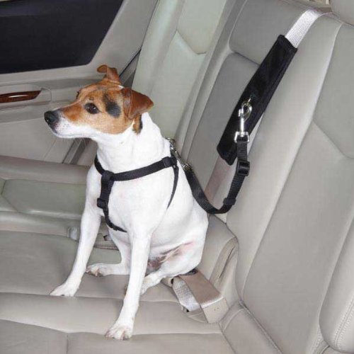 Pet Gear Car Seat front-393039