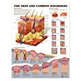 Skin and Common Disorders Anatomical Chart Laminated