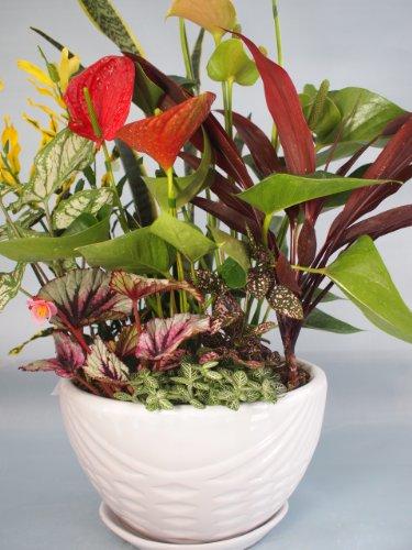 御祝いやお部屋のインテリアに最適!熊本産、観葉植物ロック寄せ合わせ。