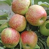 Apple Braeburn