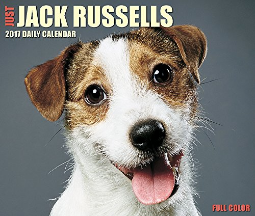 Just Jack Russells 2017 Box Calendar (Dog Breed Calendars) (Just Jack compare prices)