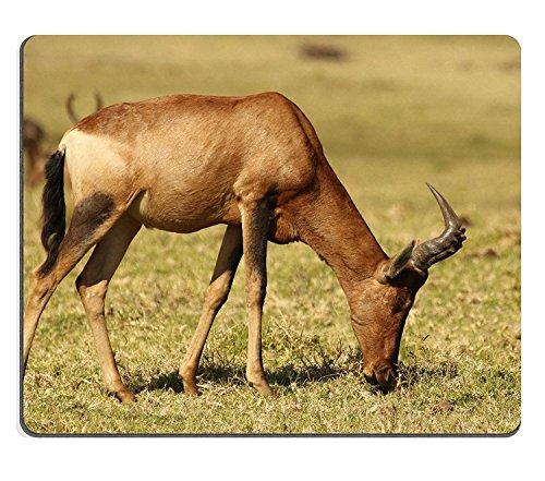 wyrujyu-mousepad-sudafrikanische-kuhantilope-alcelaphus-buselaphus-caama-oder-alcelaphus-caama-bei-k
