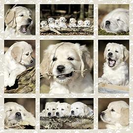 Dog Kids Jigsaw Puzzle, 1000-Piece