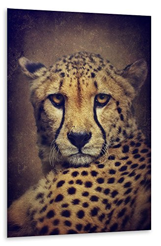 poster-photo-150x100-cm-animaux-cheetah-portrait-interieur-gelb-semi-lustre-premium-photo-paper-mura