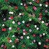 Outsidepride Cypress Vine Mix - 100 Seeds