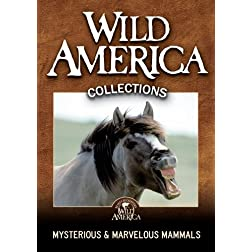 Mysterious & Marvelous Mammals Collection