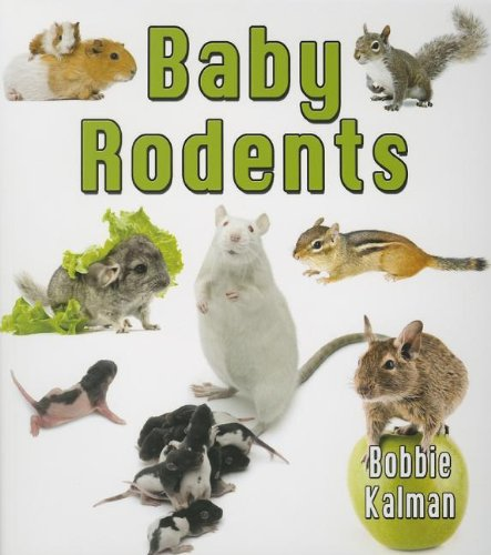 Baby Rodents (It's Fun to Learn about Baby Animals (Paperback))