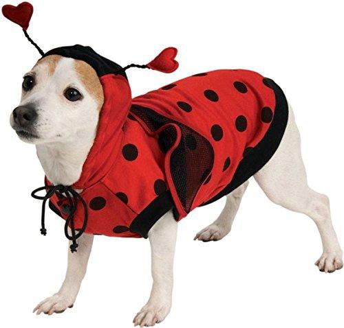 Morri (Homemade Bug Costumes For Adults)