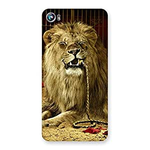 Impressive Dude Lion Multicolor Back Case Cover for Micromax Canvas Fire 4 A107