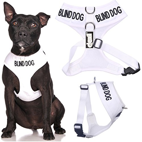 blind-dog-dog-has-limited-no-sight-white-colour-coded-non-pull-front-and-back-d-ring-padded-and-wate
