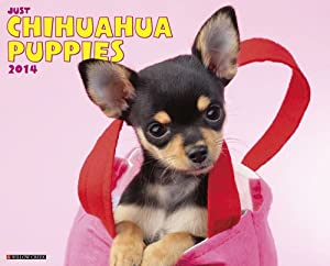 Chihuahua Puppies - 2014 16-Month Calendar