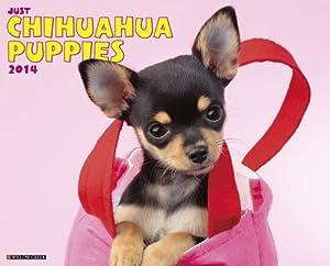 Chihuahua Puppies - 2014 16-Month Calendar