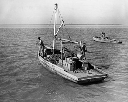 Fisherman raking oysters on a fishing boat in Apalachicola Bay