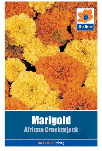 marigold-african-crackerjack