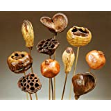 Polished Pod Assortment on Stems, Pack of 10
