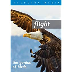Flight: The Genius of Birds