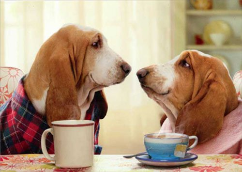Bassett Couple Nose To Nose Funny Dog Valentine's Day Card (Avanti Coffee Cups compare prices)