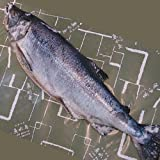 魚水島 「厳選」新巻鮭 5kg物